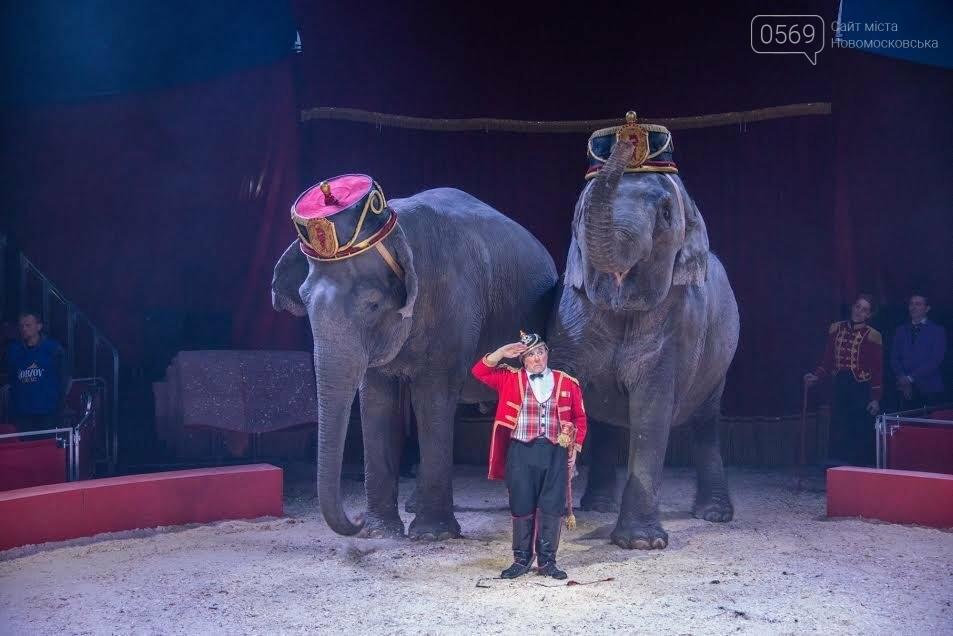 Цирк «Кобзов» с новой программой в Новомосковске!, фото-3