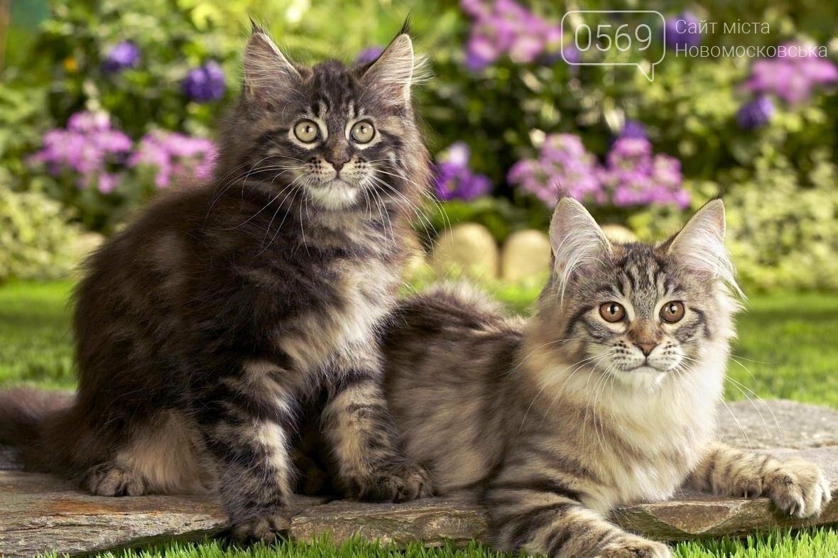 Сегодня Всемирный день кошек, фото-1