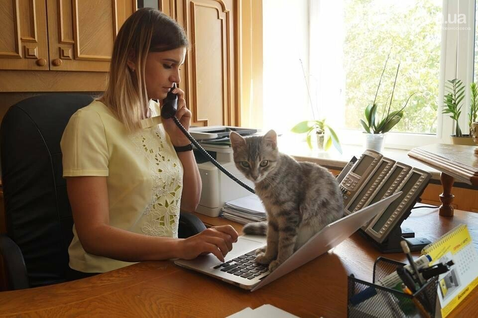 В штате ДнепрОга появился кот, фото-1