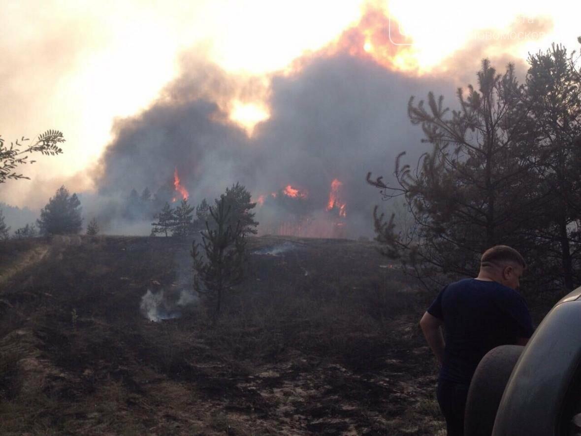 Крупный лесной пожар в Новомосковском районе, фото-1