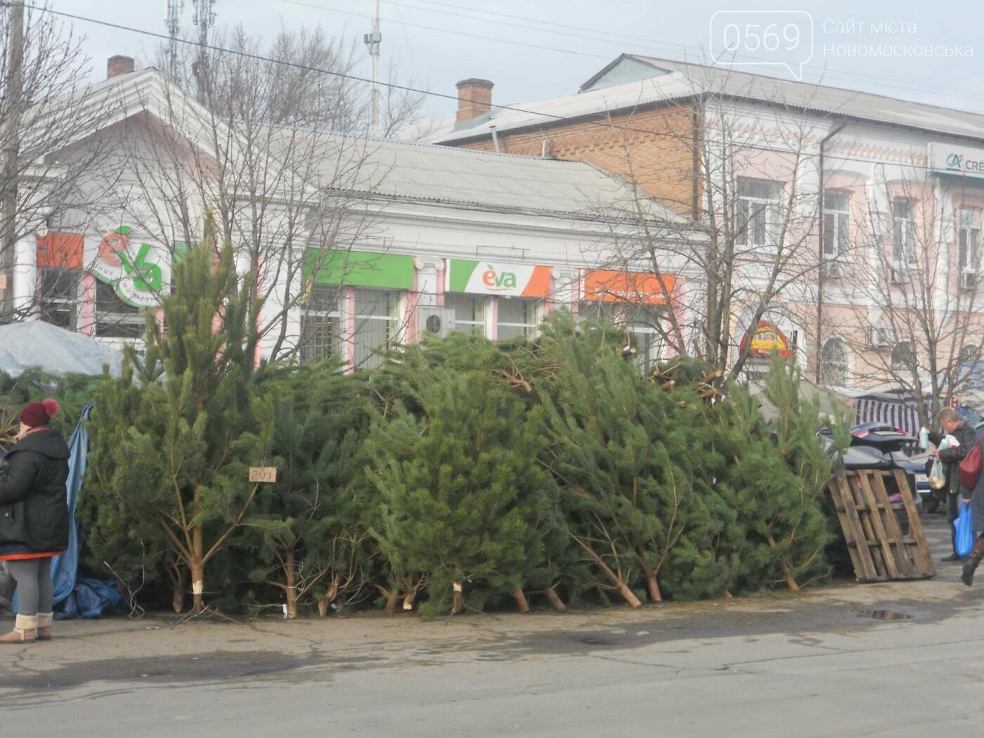 В Новомосковске началась продажа новогодних сосен, фото-4