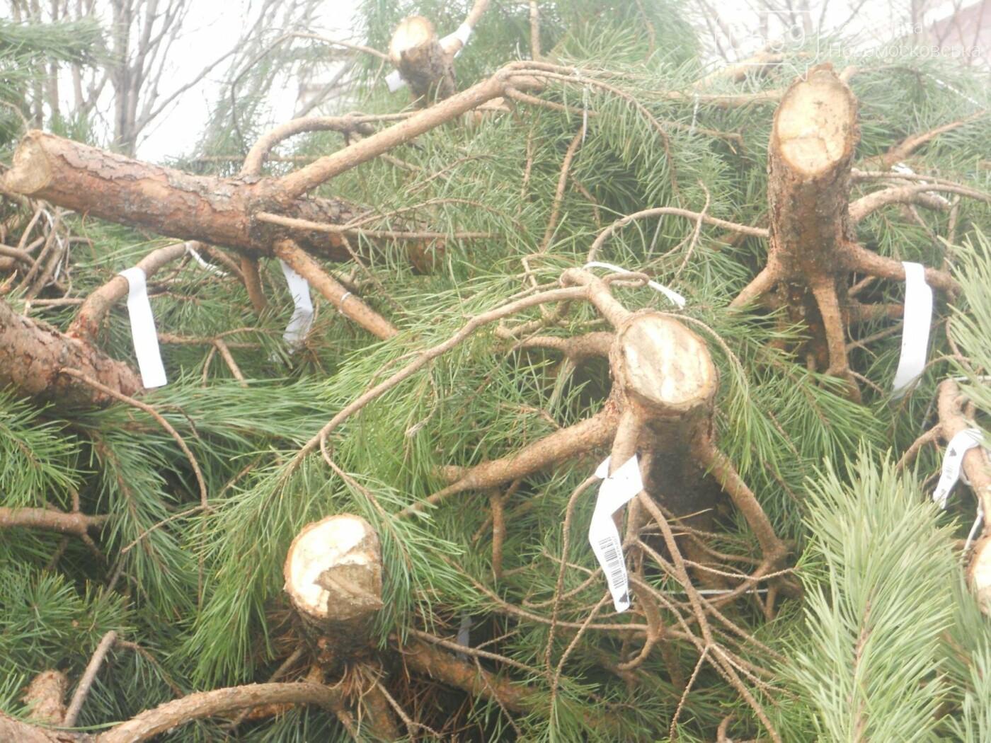 В Новомосковске началась продажа новогодних сосен, фото-6