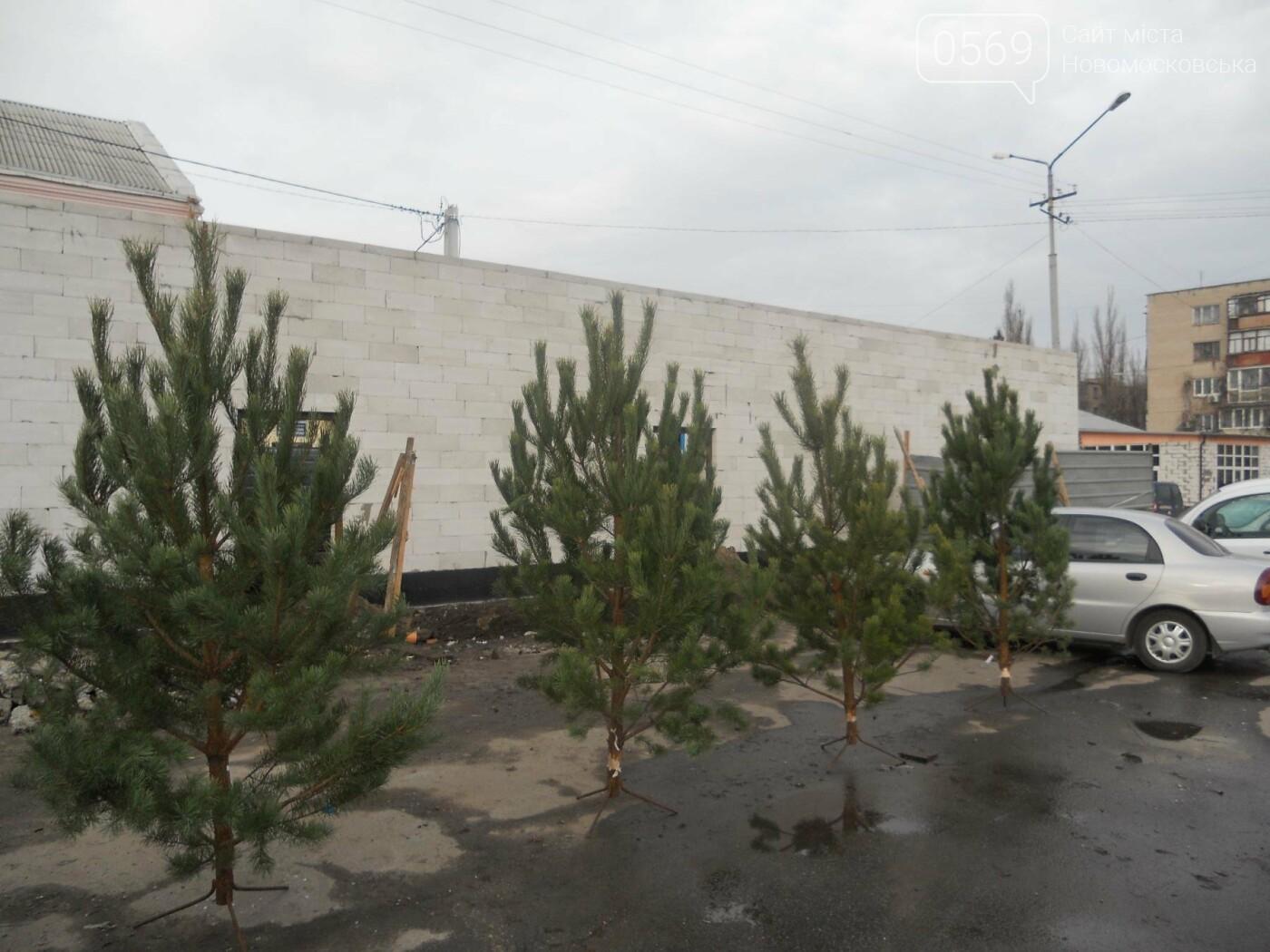 В Новомосковске началась продажа новогодних сосен, фото-3