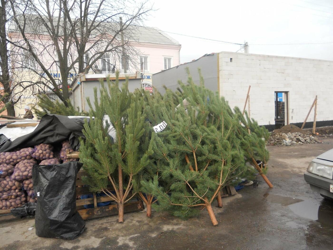 В Новомосковске началась продажа новогодних сосен, фото-1