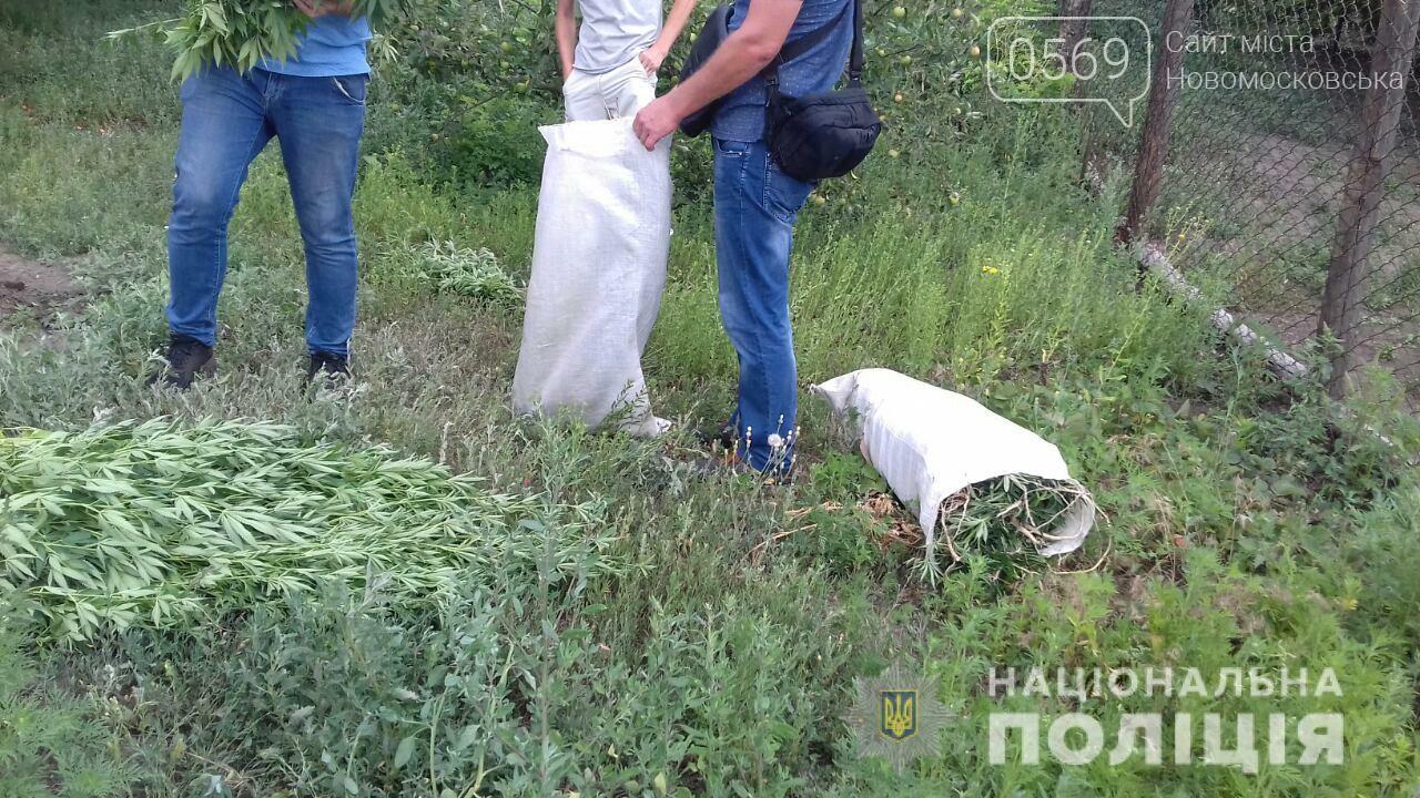 Новомосковські поліцейські за літо знищили понад 7 тисяч кущів конопель і маку, фото-1