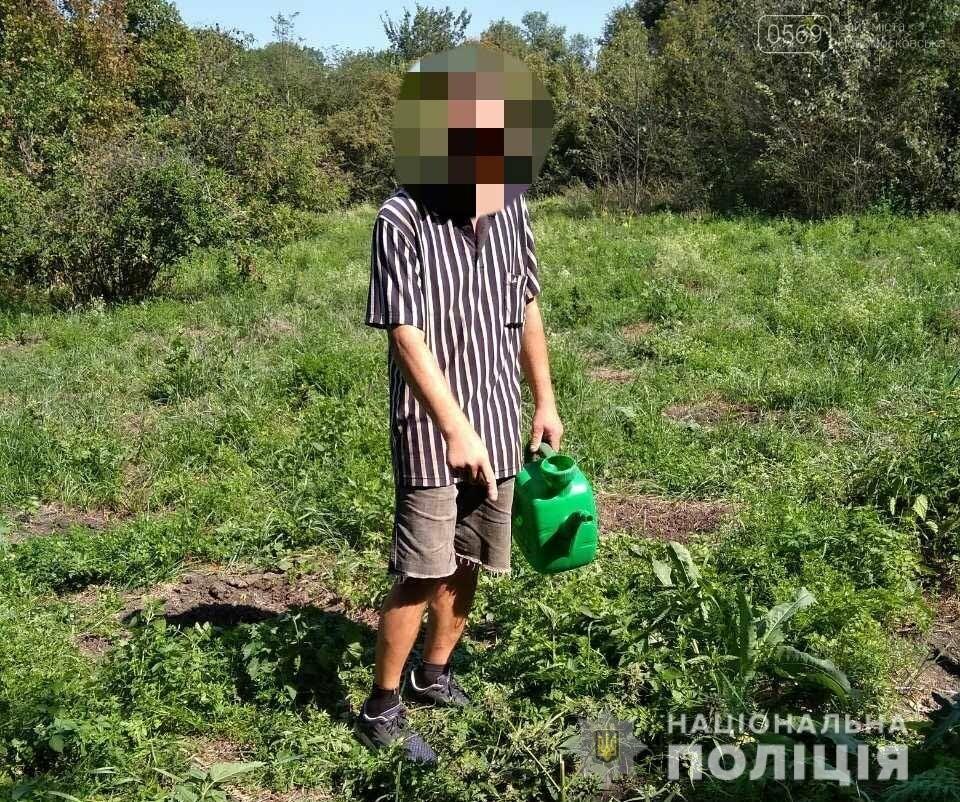 Мешканець Новомосковська вирощував коноплі у придорожній лісосмузі, фото-1