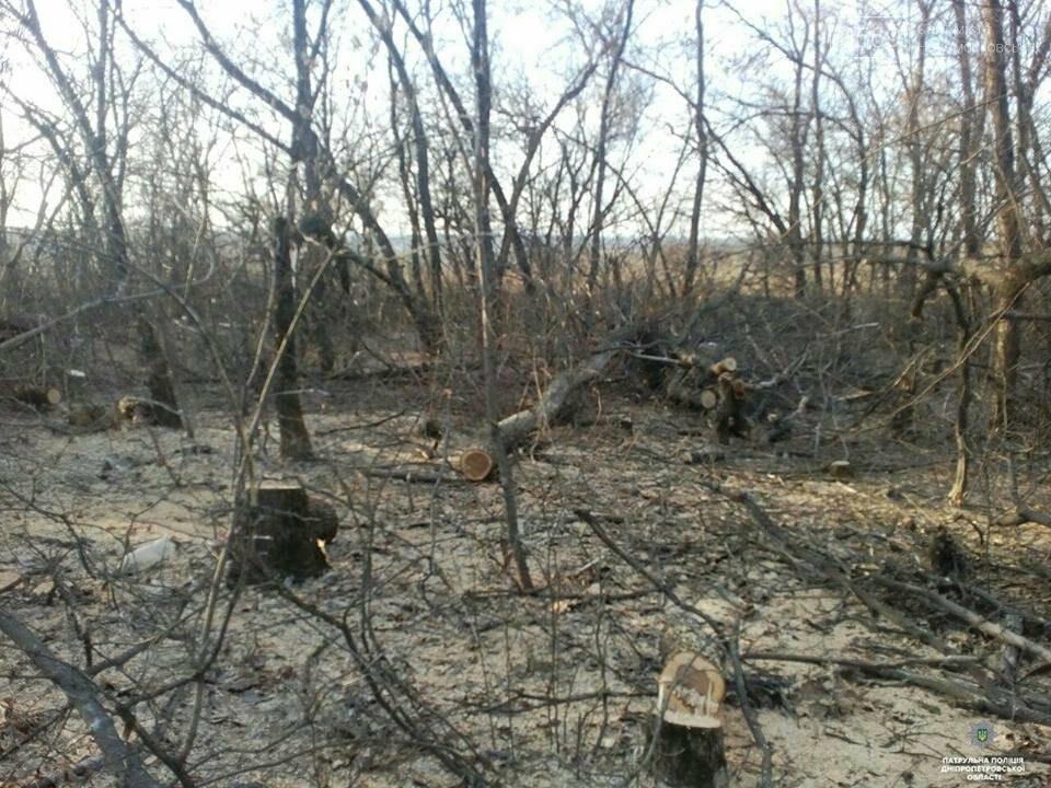 На Новомосковщині незаконно вирубували лісосмугу, фото-2