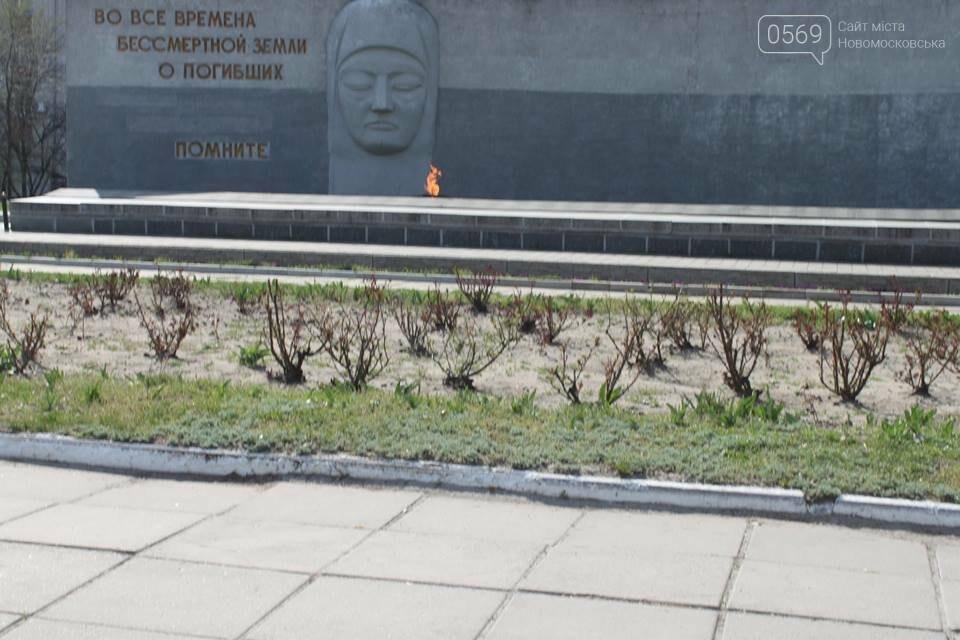 У Новомосковську висадили 300 кущів троянд, фото-1