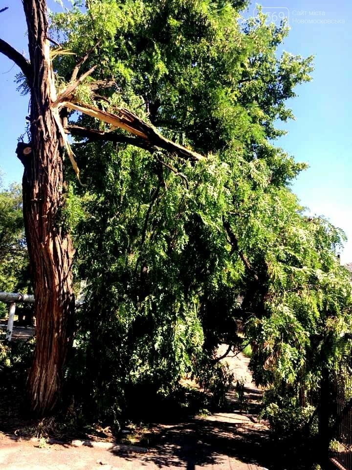 Новомосковськ очистили від повалених штормовим вітром дерев та гілок, фото-3