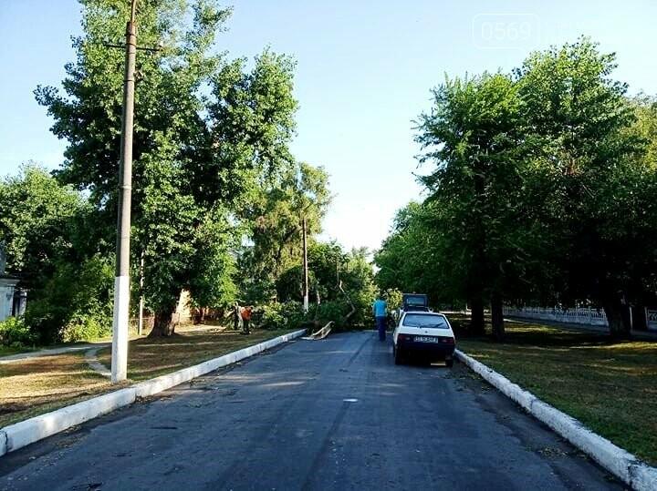 Новомосковськ очистили від повалених штормовим вітром дерев та гілок, фото-1