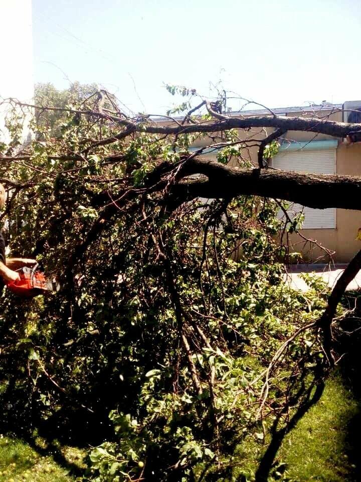 Новомосковськ очистили від повалених штормовим вітром дерев та гілок, фото-2