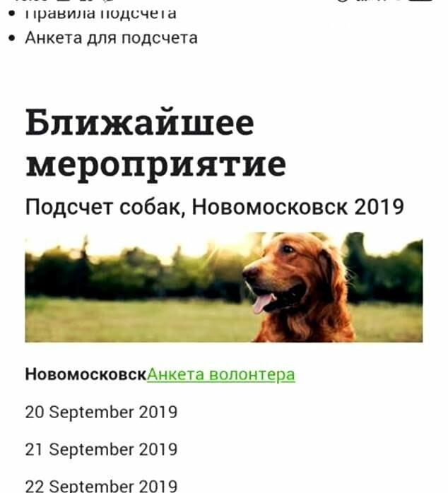 У Новомосковську запрошують допомогти з підрахунком безпритульних тварин, фото-1