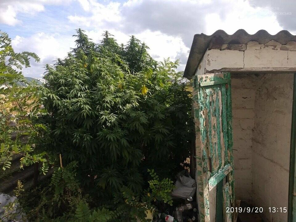 У Знаменівці поліцейські офіцери громади вилучили марихуани більш ніж на пів мільйона, фото-2