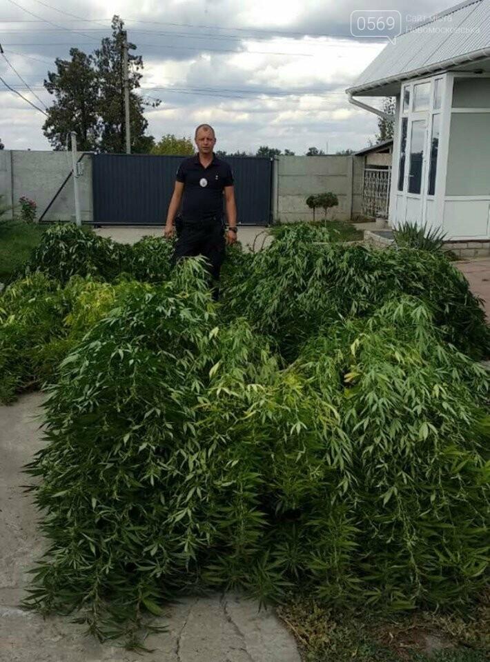 У Знаменівці поліцейські офіцери громади вилучили марихуани більш ніж на пів мільйона, фото-1