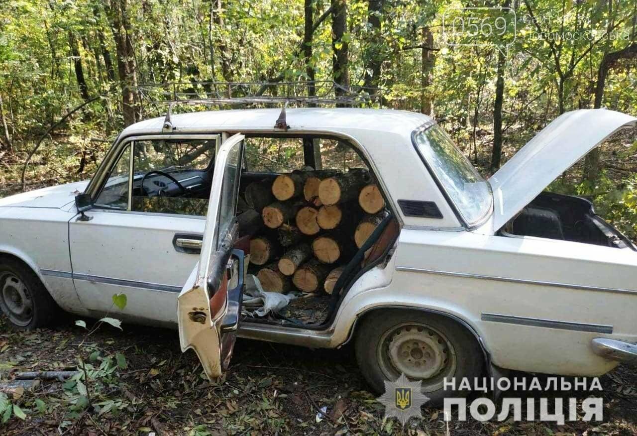 У Новомосковському районі в лісосмузі незаконно спилювали дерева, фото-1