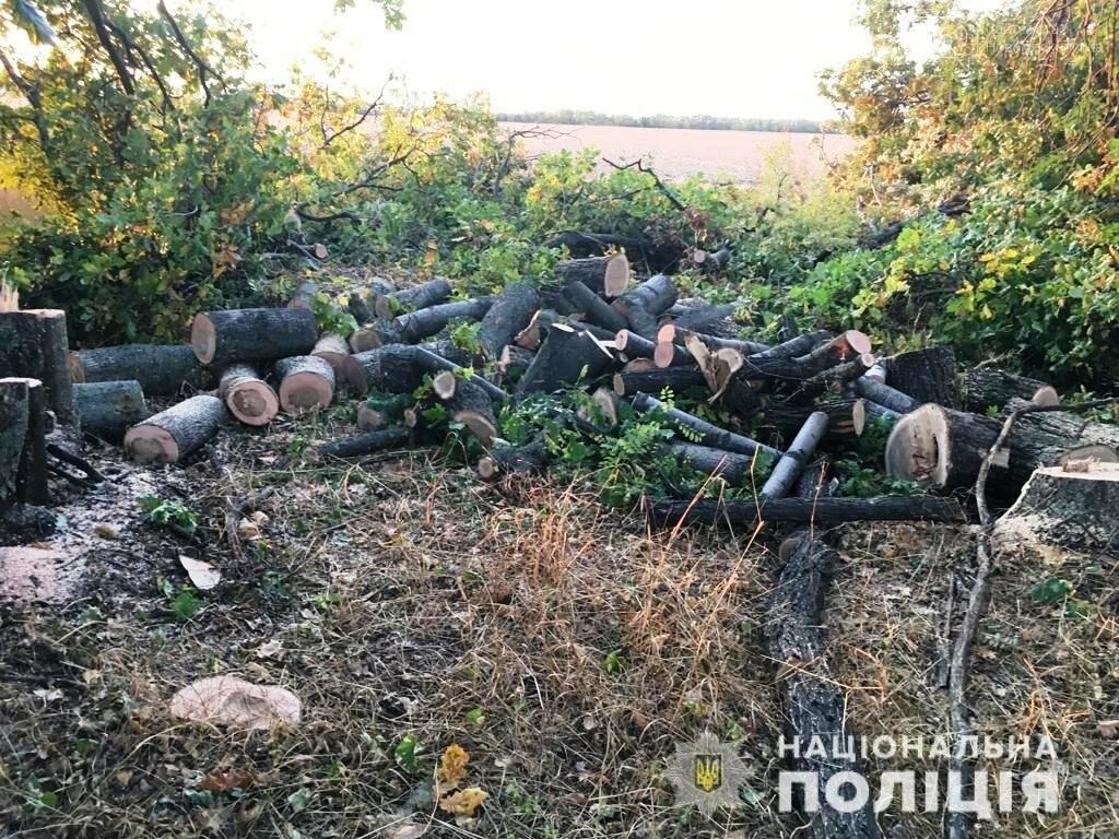 У Новомосковському районі в лісосмузі незаконно спилювали дерева, фото-2