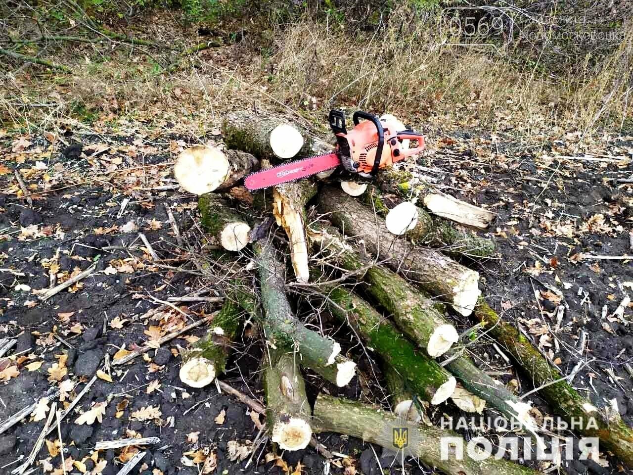 Працівники Новомосковського відділу поліції виявили три факти незаконної вирубки лісу, фото-1