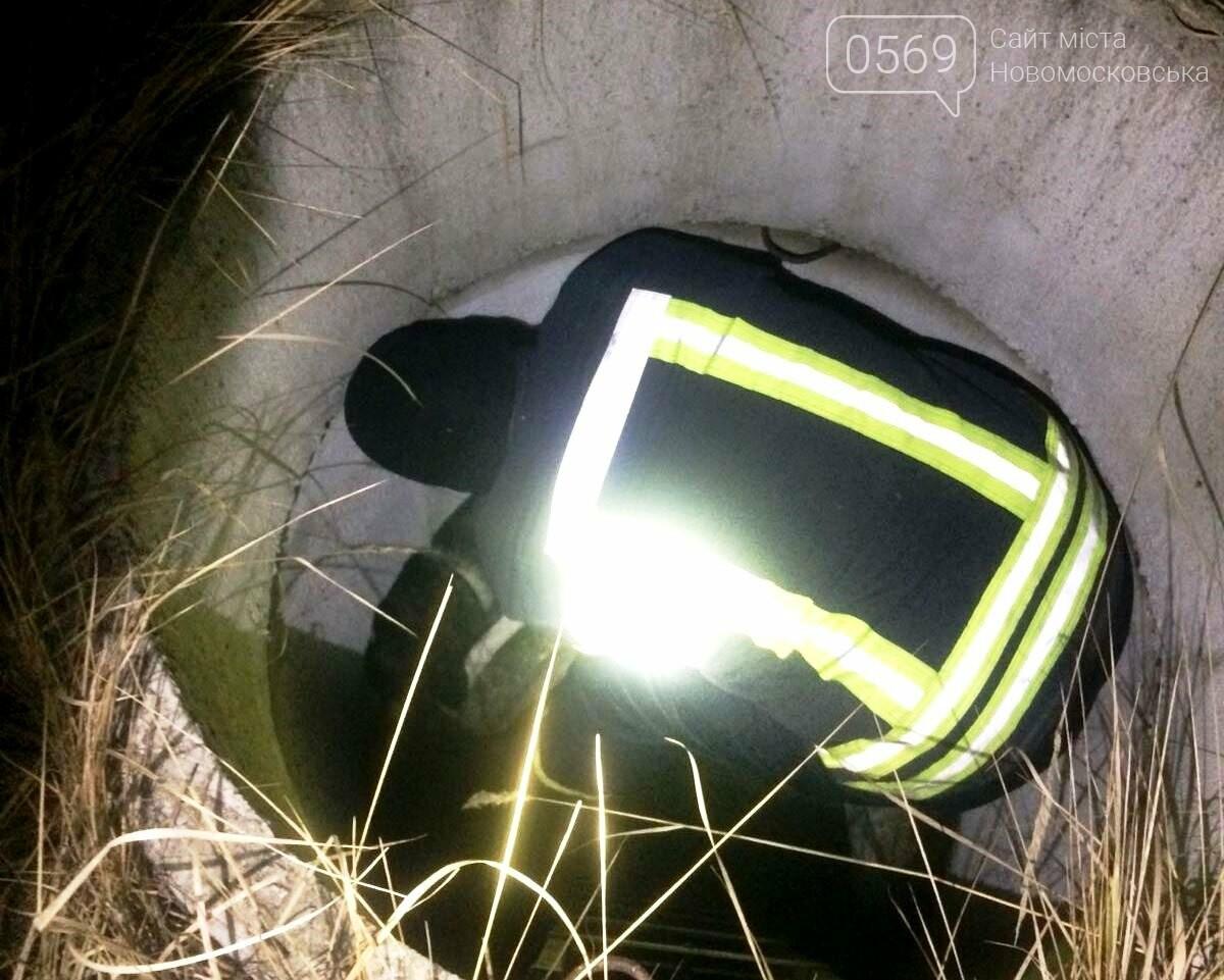У Новомосковську рятувальники місцевої частини визволили собаку з колодязя, фото-1