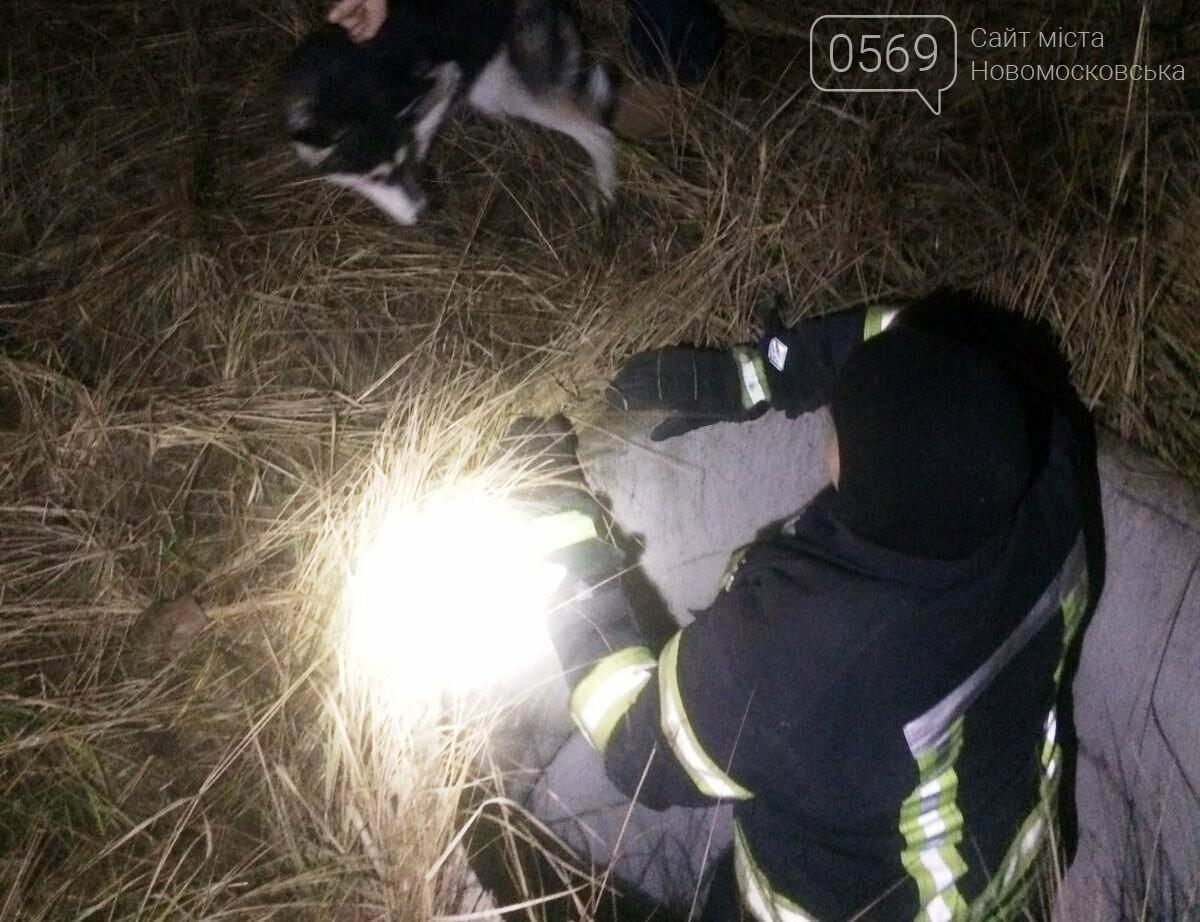 У Новомосковську рятувальники місцевої частини визволили собаку з колодязя, фото-2