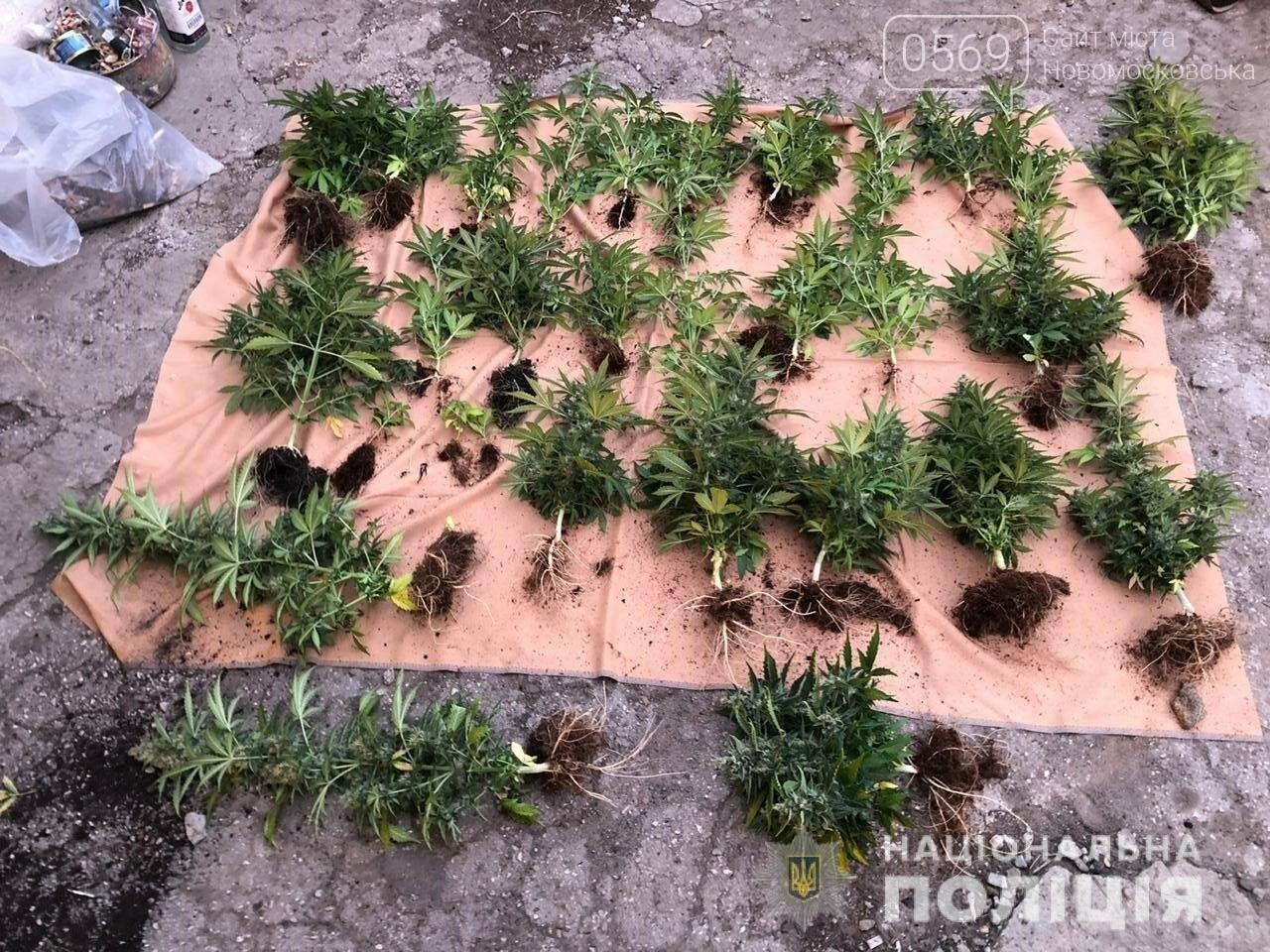 У Новомосковську затримали наркозбувачів, які облаштували будинок під вирощування галюциногенних грибів , фото-3