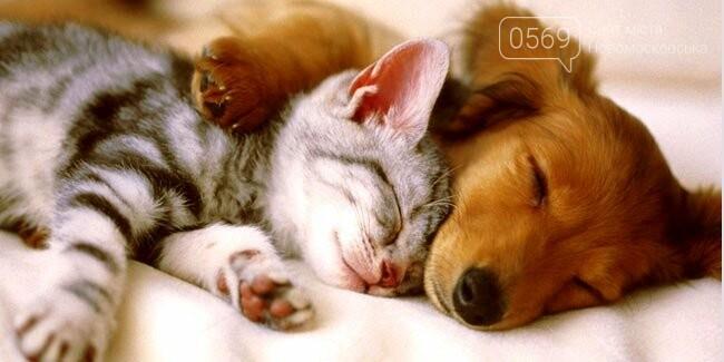 Сьогодні відзначають Міжнародний день сну, фото-1