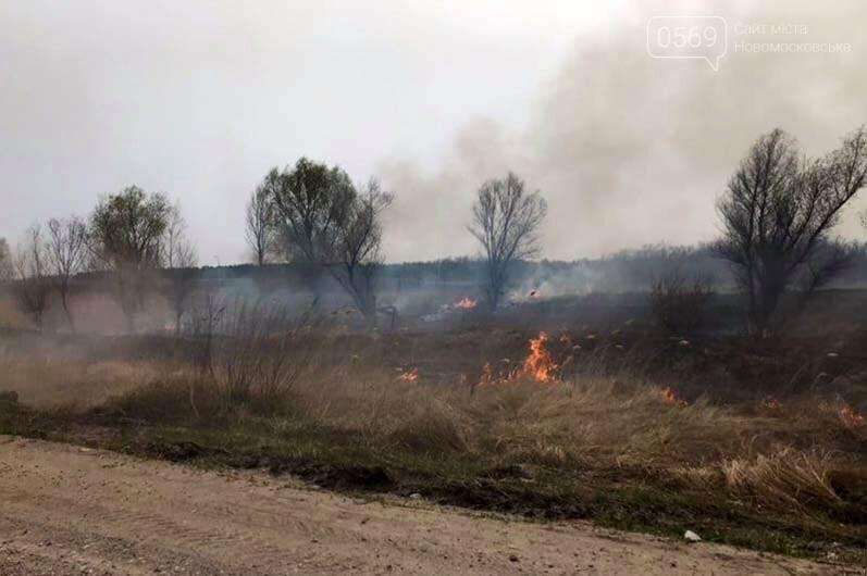 На Дніпропетровщині палають екосистеми: гине безліч мілких тварин і птахів, фото-3