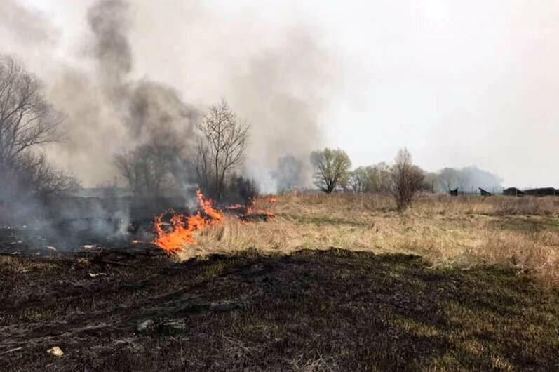 На Дніпропетровщині палають екосистеми: гине безліч мілких тварин і птахів, фото-1