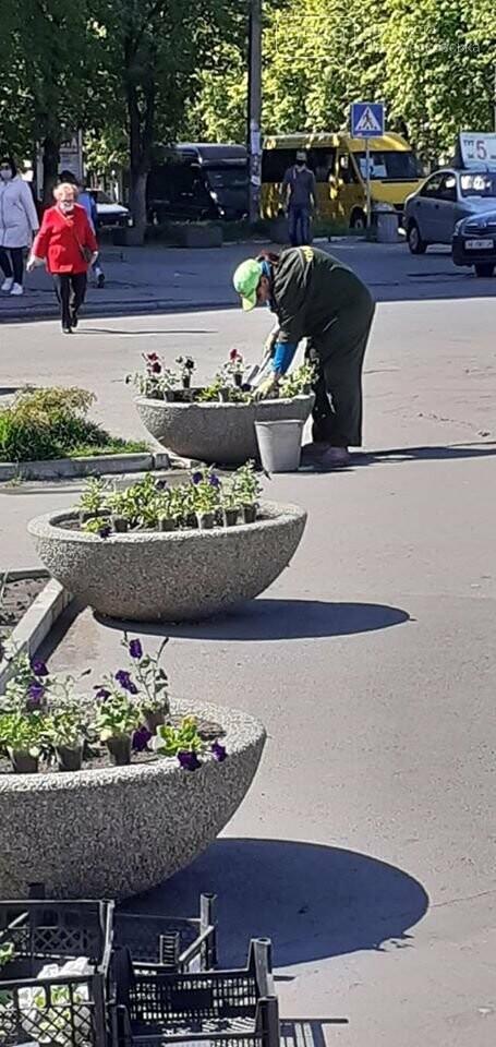 Які квіти прикрасять Новомосковськ влітку, навесні та восени: в місті облаштовують клумби , фото-2