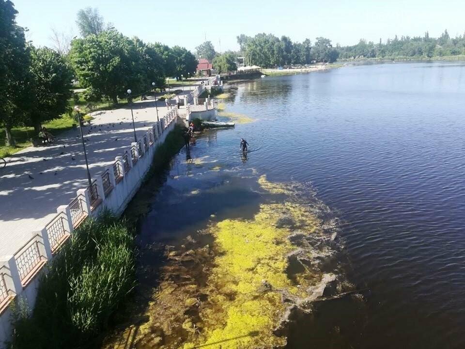 Береги річки Самари, в межах міста Новомосковська, почистять від тіни та водоростей, фото-4
