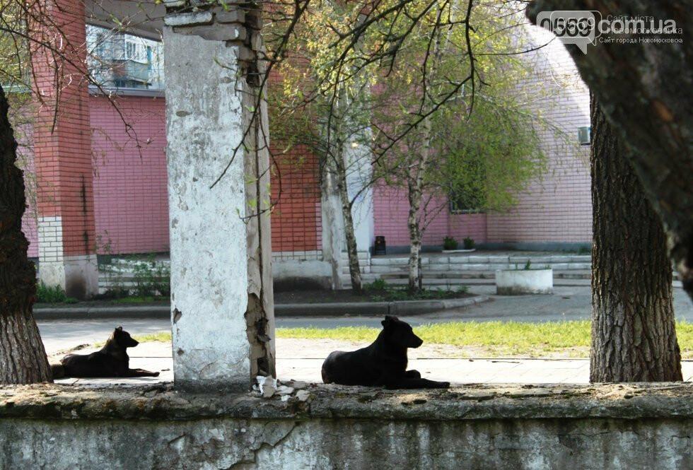 Усе  буде відкрито: у Новомосковську продовжують демонтаж огорожі корпусів колишньої лікарні, фото-6
