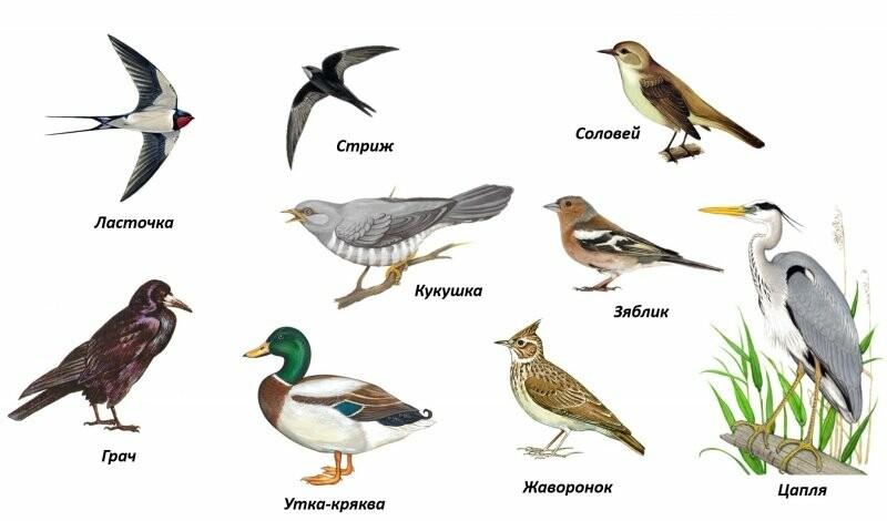 12-го жовтня - Всесвітній день перелітних птахів, фото-1