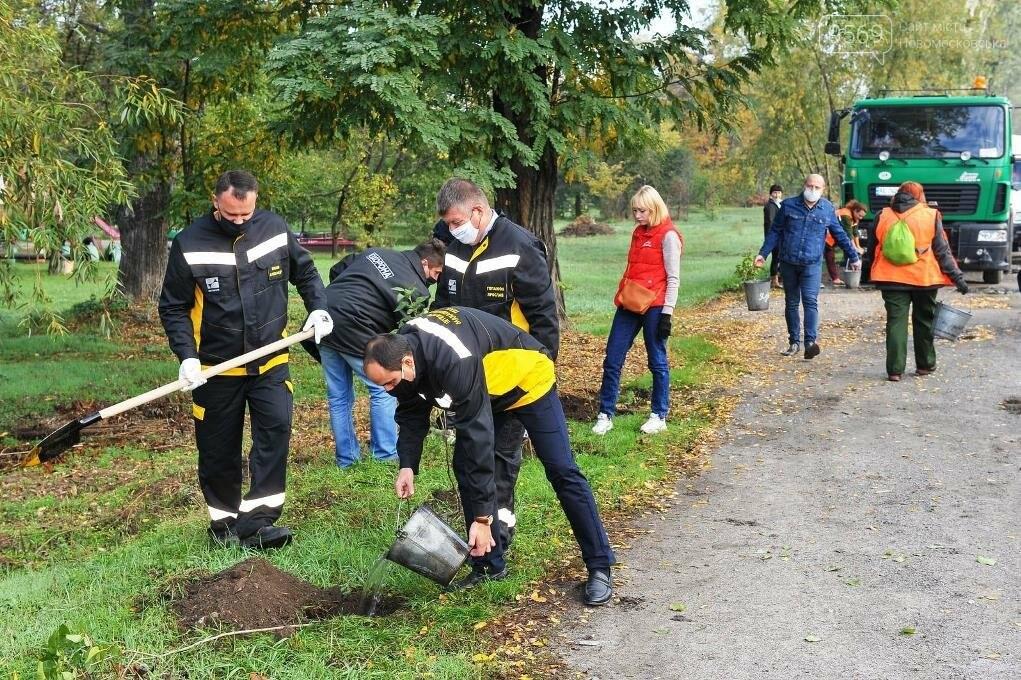 У Новомосковську біля ІНТЕРПАЙП НМТЗ згодом розквітне ціла алея бузку , фото-3