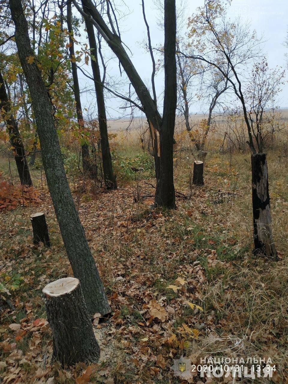У Новомосковському районі поліцейський офіцер громади у свій вихідний припинив незаконну вирубку лісу, фото-1
