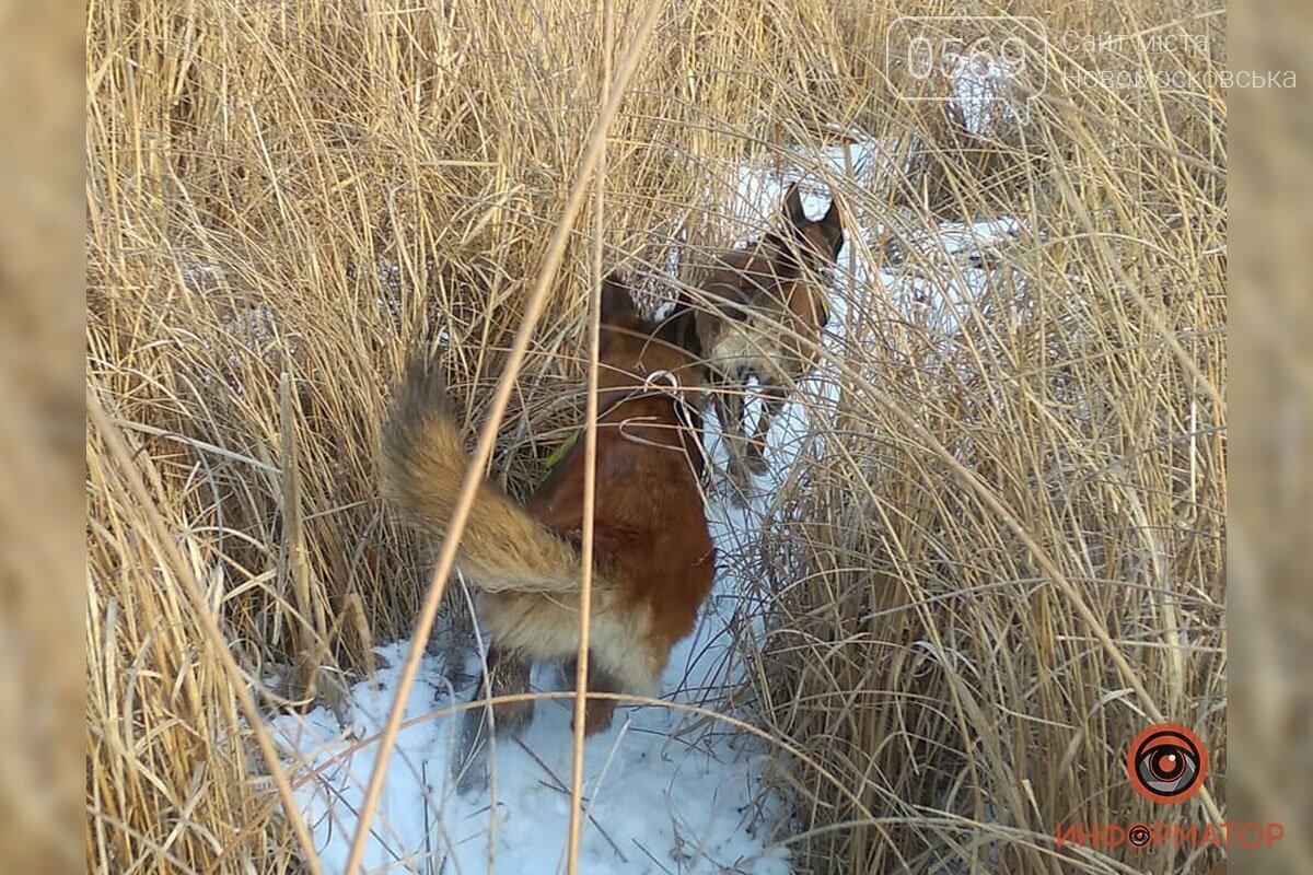 Поліція області, волонтери та кінологи продовжують пошуки зниклої 80-річної мешканки Перещепинської ОТГ, фото-3