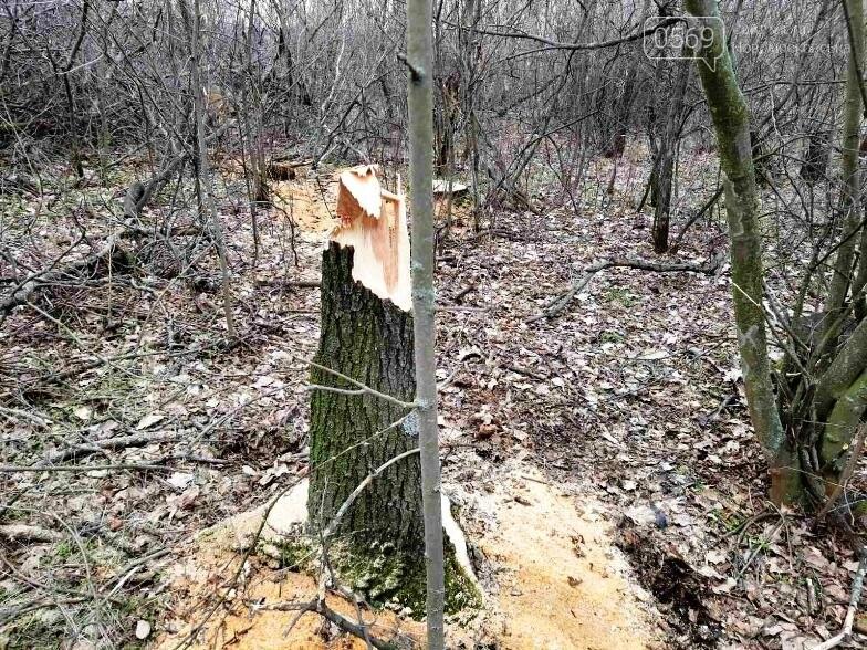 """У Губиниській ОТГ   """"із небаченою нахабністю у варварський спосіб вирізаються вщент дерева"""" , фото-4"""
