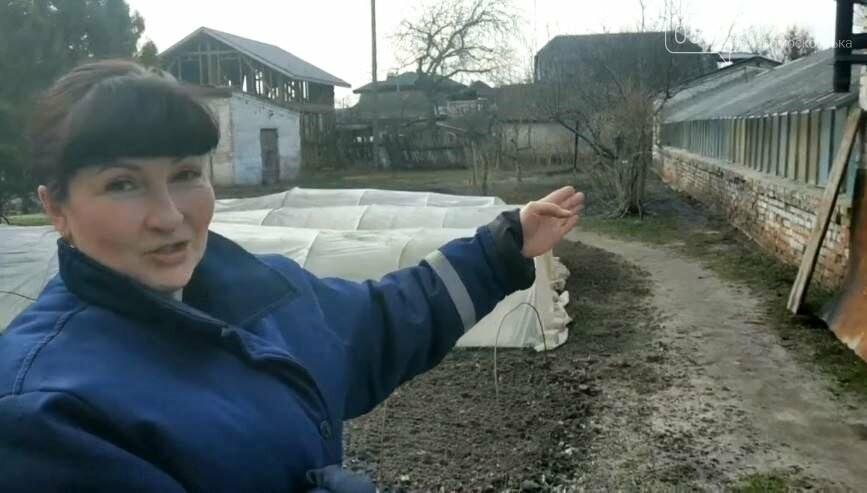 У Новомосковську продовжують відновлення роботи міської оранжереї, фото-5