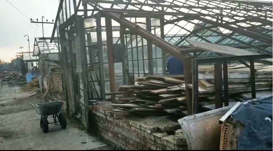 У Новомосковську продовжують відновлення роботи міської оранжереї, фото-8